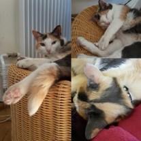 Chat suisse- qui nous accueillis dans sa maison