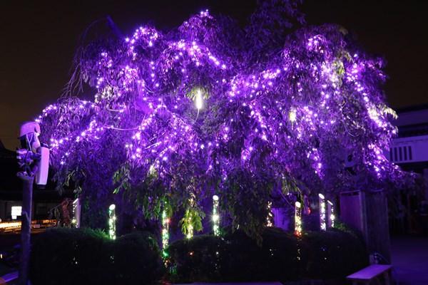 枝垂れ桜と竹のイルミ