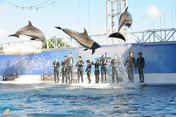「イルカと泳ごう ふれあいスイミング」