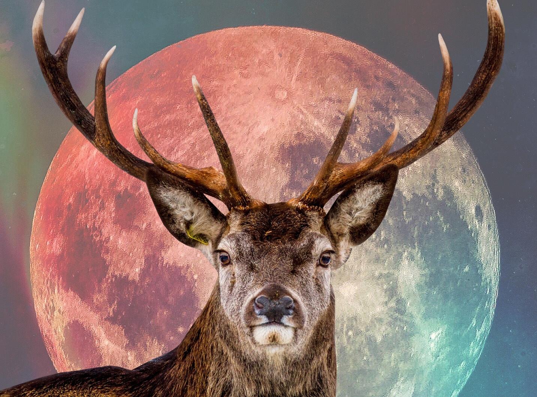 Buck Moon: July's Full Moon