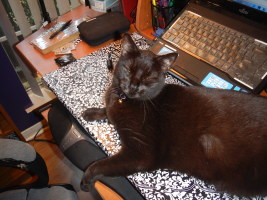 Desk cat of the day matches as well...