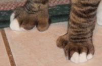 Cat thumbs