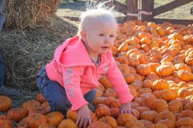 Little pumpkin patch