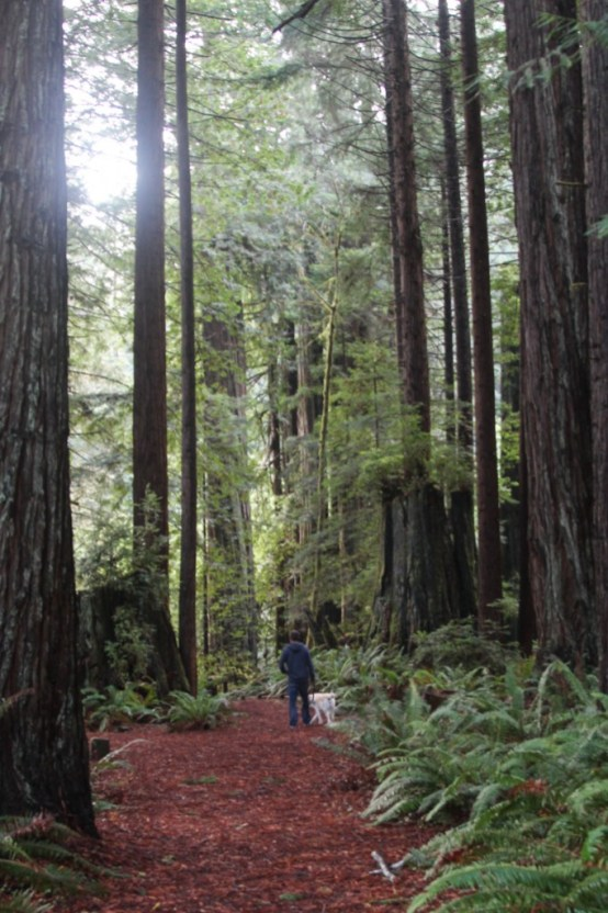 One of many Redwood trails.