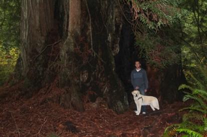 Inside a Redwood
