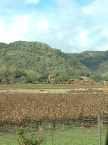 From the truck window, wine county
