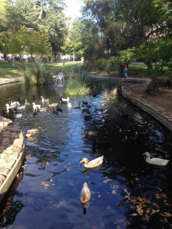 Sonoma central park