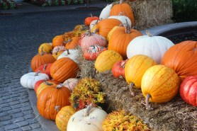 Pumpkins!!!!