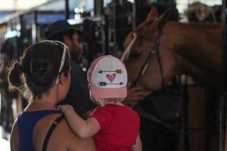 Meeting Andreas horses