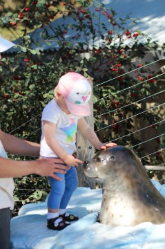 Picking the seals nose