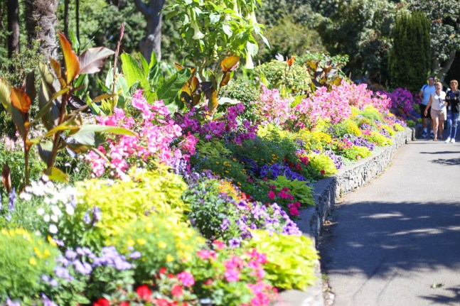The flowers of Beacon Hill Park
