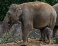 10-14-15-elephant15-1