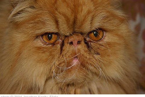 'The Grumpiest Cat Alive' photo (c) 2004, Jonathan Keelty - license: http://creativecommons.org/licenses/by/2.0/