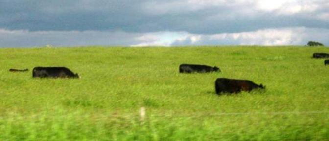 Good spring rains or is farmer Brown's cows where they shouldn't be