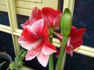 flower 1 (Small)
