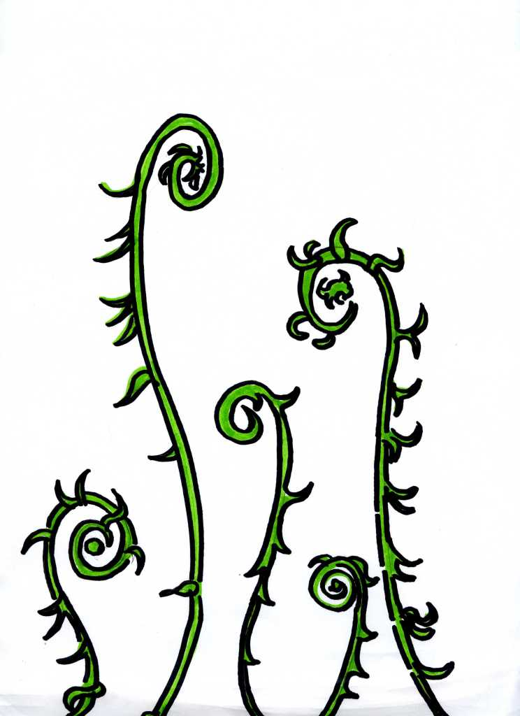 caricature-of-furled-fiddlehead-plants-that-suggest-the-shape-of-guitar-and-mandolin