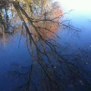 Longwood-Gardens-creek-hamrick