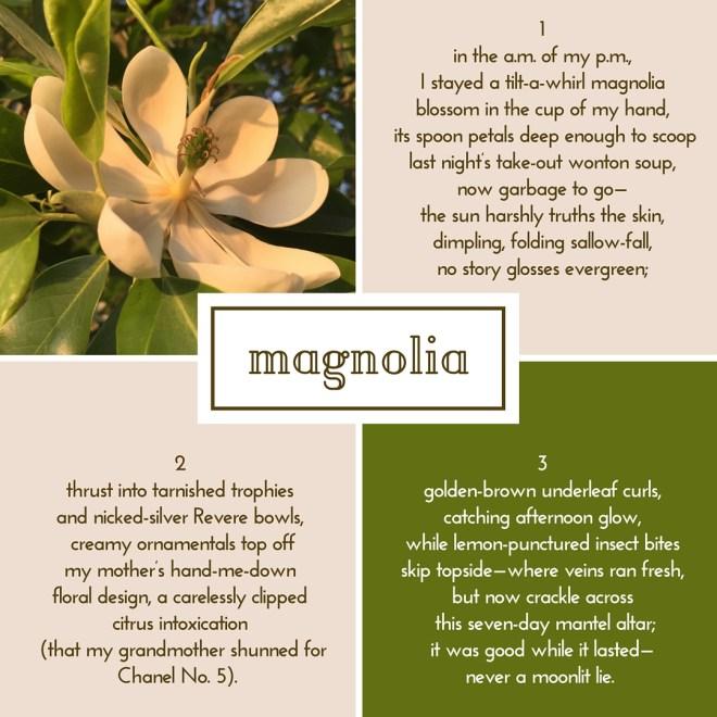 magnolia-poem-randomstoryteller-image-from-UD-Botanic-Gardens