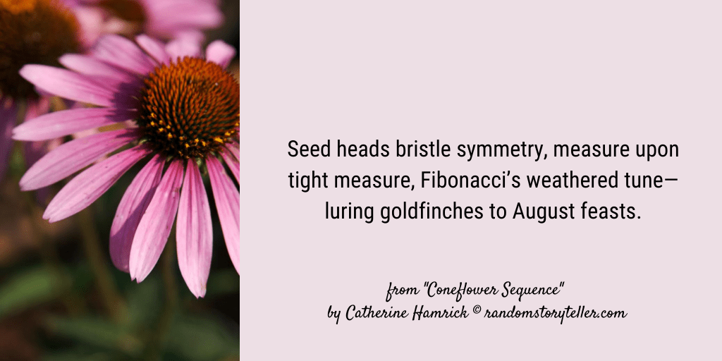 Excerpt from poem Coneflower Sequence by chamrickwriter randomstoryteller with image of coneflower flower head and lavender petals 1042x512 px