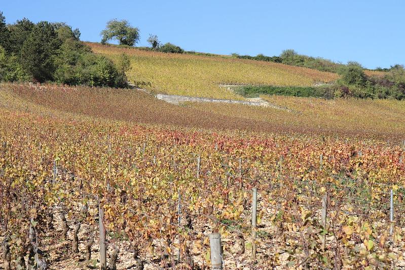 bourgogne à vélo dans les vignes