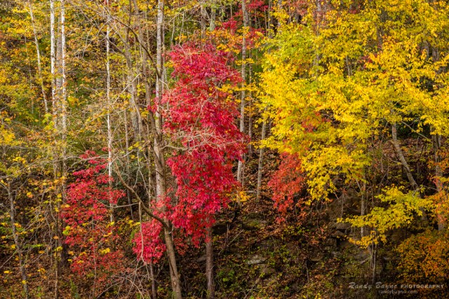 fall colors - red and yellow