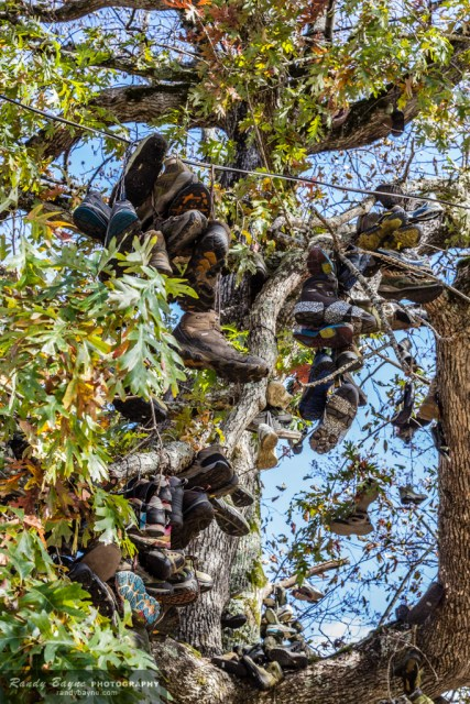 Shoe tree at Neel's Gap, GA