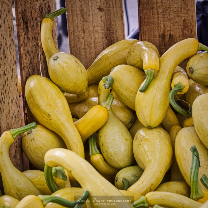 Yellow Squash - after