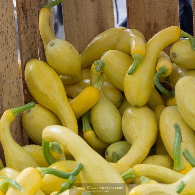 Yellow Squash - before - daily practice