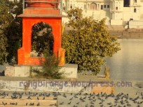 Shivling temple in the middle of Pushkar Lake