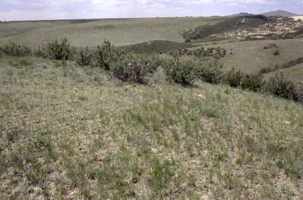 Grassland Slides - Range Types of North America