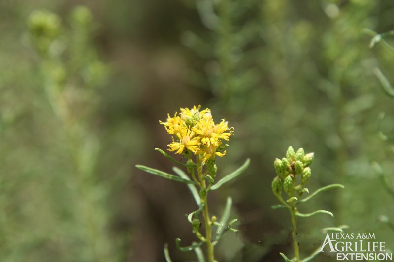 Flowering Plants Non