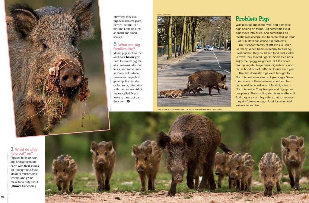 pigs-Nov2012-page3