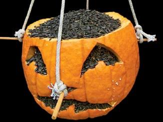 pumpkin feeder by Mark Godfrey