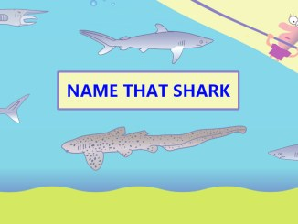 Name That Shark