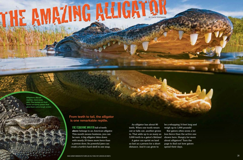 Alligators Ranger Rick September 2017 1