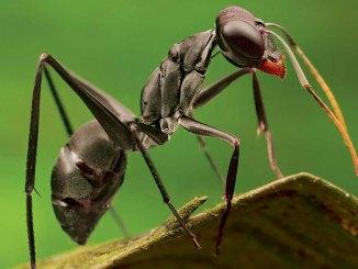 Ants Ranger Rick May 2017