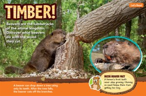 Beavers Ranger Rick Jr August 2017 1