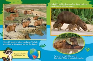 Mystery Animal Capybara Ranger Rick Jr March 2016 3