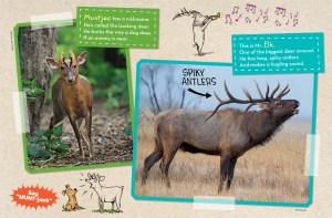 Deer Family Ranger Rick Jr December January 2016 3