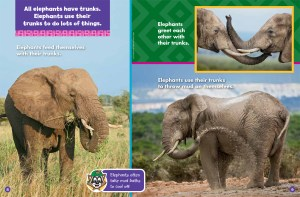 elephants november 2017 2