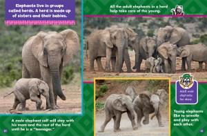 elephants november 2017 3
