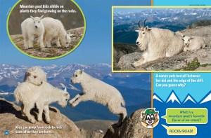 Mountain Goats Ranger Rick Jr May 2017 3