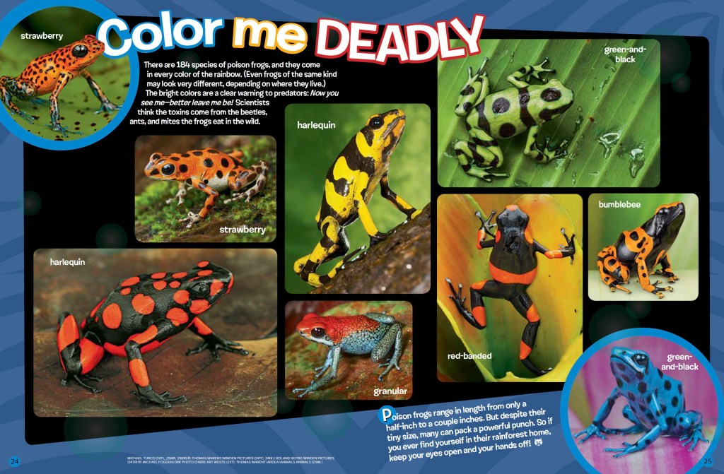 Poison Frogs Ranger Rick February 2017 3
