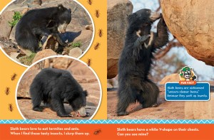 Sloth Bear Ranger Rick Jr March 2017 2