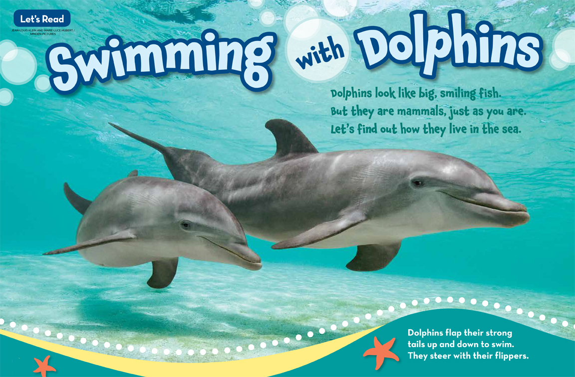 swimming with dolphins nwf ranger rick