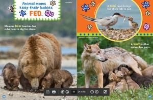 Ranger Rick Jr Animal Moms May 2018 3