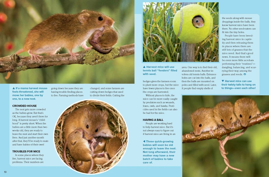 Ranger Rick Harvest Mice April 2014 3