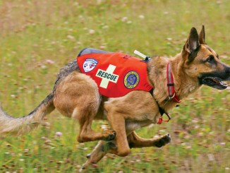 Ranger Rick Dogs on Duty August 2014