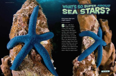 Ranger Rick Sea Stars August 2014 1