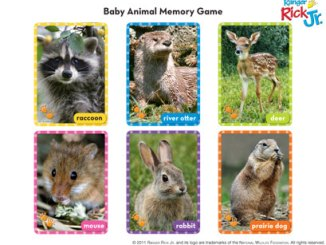 baby animal cards